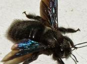 Piège mouches avec poison pas: est-on