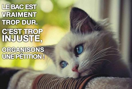 sad cat - bac trop dur