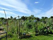 jardin melisse