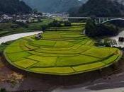 plus belles rizières terrasses Japon