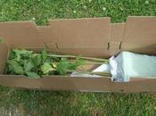 continue déco jardin avec Hibiscus Carrousel chez Globe Planter