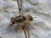 petite mouche agite nerveusement ailes...