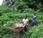 technique agricole d'Afrique l'Ouest vieille serait climato-intelligente