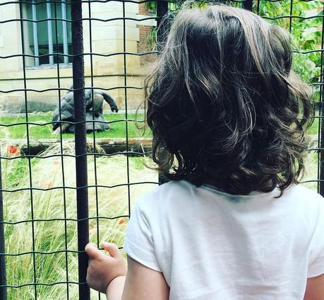 Les tortues coquines de la Ménagerie (c) D'une île à Paris