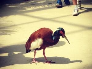 Souvenir de notre visite du Zoo de Vincennes (c) D'une île à Paris
