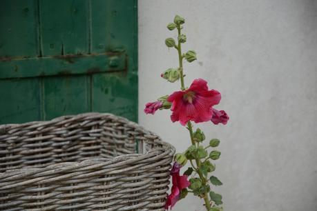 Ré fleurie