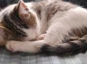 Conseils sommeil chat rêve