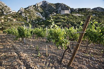 Intervins Sud-Est, Bouches du Rhône, Chateau Romanin