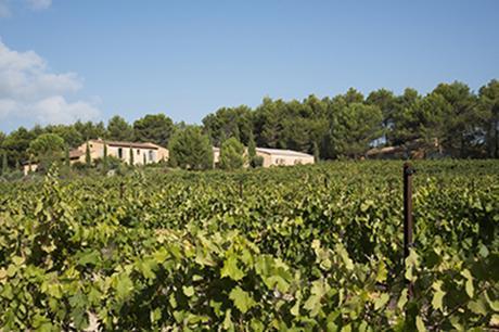 Intervins Sud-Est, vendanges Minna Villa Vineyard