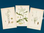 Le retour des affiches botaniques