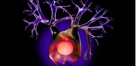 Représentation d'un neurone sur fond noir. © SUPERSTOCK/SUPERSTOCK/SIPA