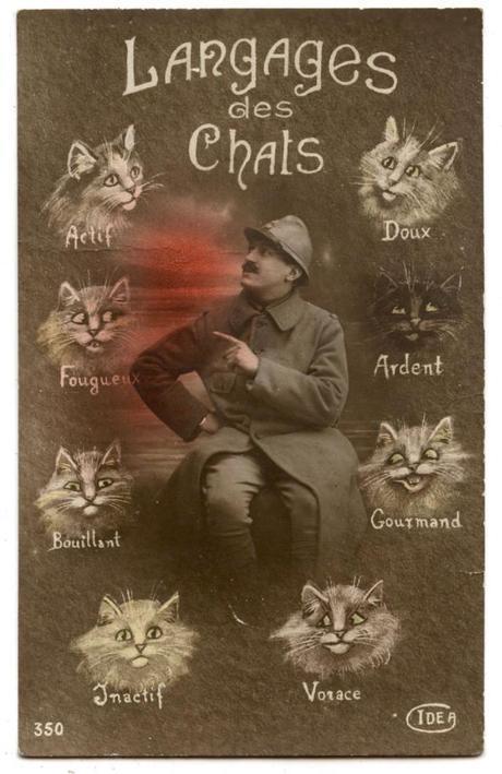 carte-postale-langage-des-chats