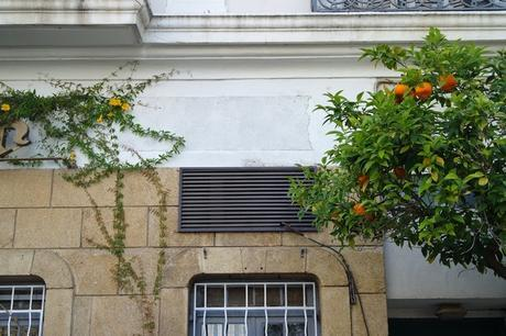 hyères var orangers