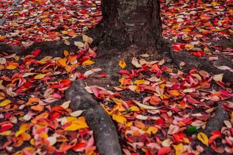 Tu sais que c'est l'automne quand ...