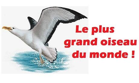 record plus grand oiseau du monde