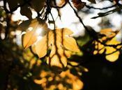 Balade d'automne Mons (Celas)