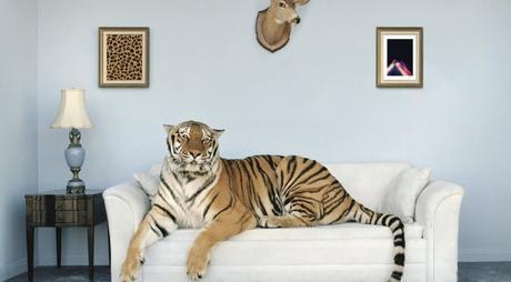 Union Analogtronics x Blu « Cheetah in the City » @@@@½