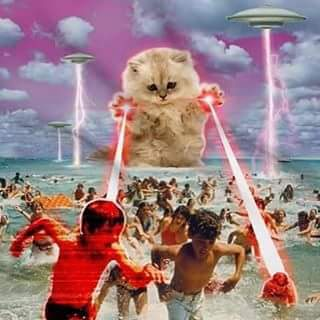lolcat-attaque-chat-laser