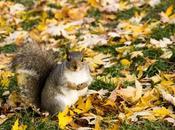 Écureuils Montréal