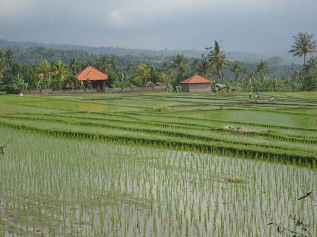 Itinéraire de 4 semaines en Indonésie