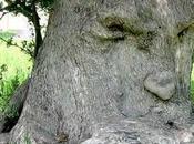 L'olivier Pensant Italie