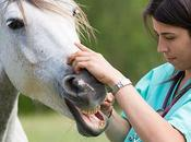 Pourquoi cheval maigrit