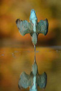 Et si on noyait le dernier colibri avec la sueur du dernier pigeon