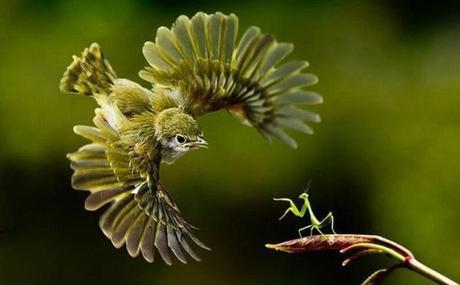 Insectes et prédateurs