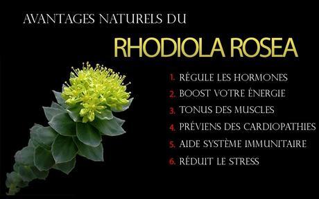 effets secondaires rhodiola