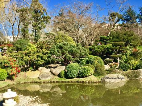 Un bout de Japon dans la ville rose