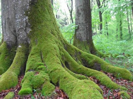la vie secr te des arbres peter wohlleben d couvrir