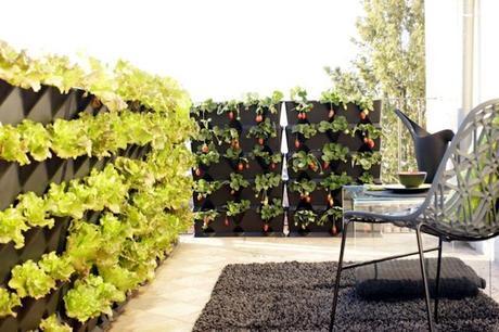 Jardiner En Appartement Potager Interieur Et Legumes De Balcon