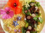 Salade printanière colorée (Vegan)