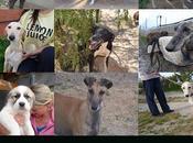 chiens galgos loulous tous adoptés remontent dans leurs familles juin 2017