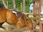 Frais vétérinaires combien coûte santé cheval