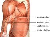 Tendinite triceps brachial causes, symptômes traitement
