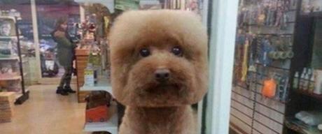 Des coupes géométriques pour chiens, cette étrange mode venue de Taïwan !!