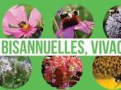 liste plantes mellifères