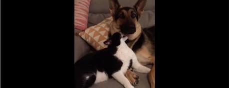 L'amour entre chien et chat