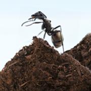 Une histoire de fourmis charpentières, 1re partie