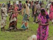 L'Inde planté millions d'arbres heures contre déforestation