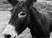 coup pied l'âne