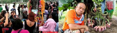 Thaïlande, arbres affolent loterie nationale (vidéo)