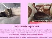 adopter sous contrat associatif chiens galgos Normandie petit chaton sevré issu d'un sauvetage
