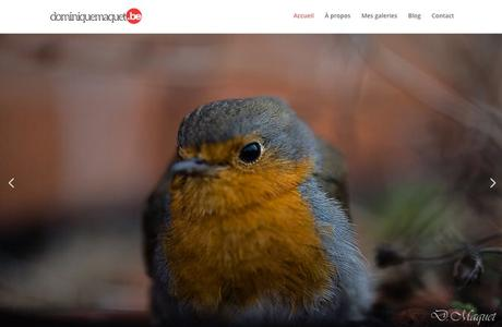 16 sites internet de photographes animaliers (mais pas que)