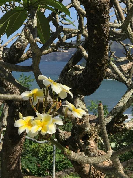 - ♥    Hiva Oa - Les îles Marquises    ♥-   -  #  La Polynésie Française  #  -  DREAM & FOOD TRAVEL GUIDE