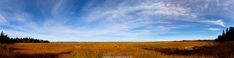 Le marais du Parc Nature...