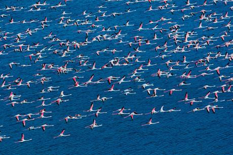 Survol en hélicoptère de la lagune nord de Venise à la recherche des flamants roses
