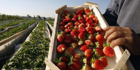Hausse des exportations agricoles en Egypte