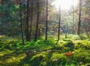 places gagner pour film l'Intelligence arbres